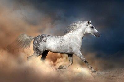 Affisch Orlov häst kör i damm