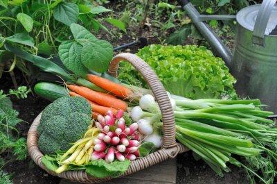 Affisch panier de légumes frais dans potager