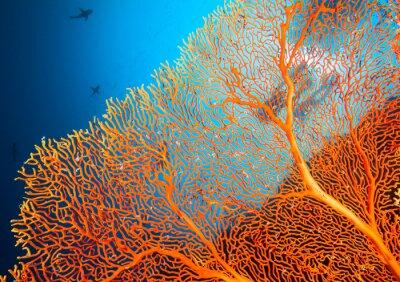 Affisch Par dykare på korallrev
