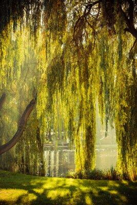 Affisch park med damm och pilträd