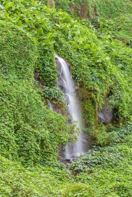 Affisch paroi humide et Verdoyante, Anse des Cascades, Ile de la Réunion
