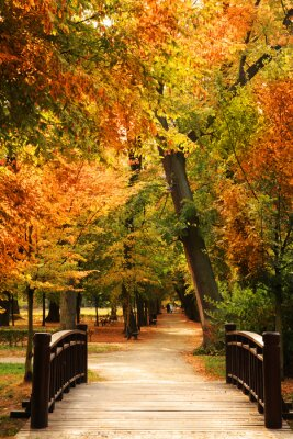 Affisch pasarela parque del otoño
