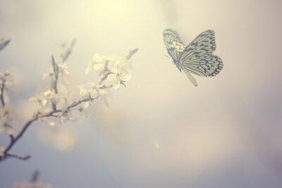 Affisch Pastellfärgade foto fjäril och vårblommor