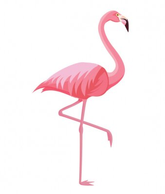 Affisch Pink flamingo on a white background. Vector illustration.