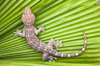 Affisch Prickig gecko på ett grönt blad palm.