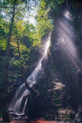Affisch Rayos de sol en Traves de las hojas Del Bosque en la cascada de Hortas, Galicien