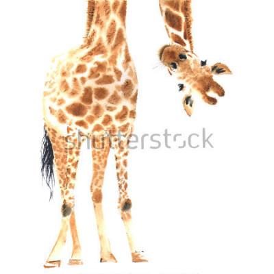 Affisch Realistisk giraff gjord i akvarell. Närbild. Illustration för handrit