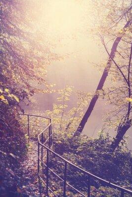 Affisch Retro filtrerad bild av en bana i skogen.