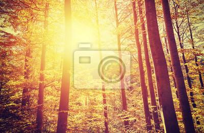 Affisch Retro tonad bild av höstliga skogen vid solnedgången.