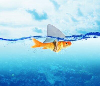 Affisch Röd fisk som haj