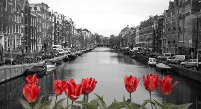 Affisch röda tulpaner i Amsterdam