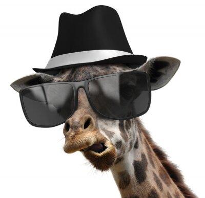 Affisch Roliga djur porträtt av en giraff med nyanser och fedora