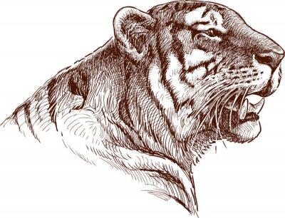 Affisch rytande tiger