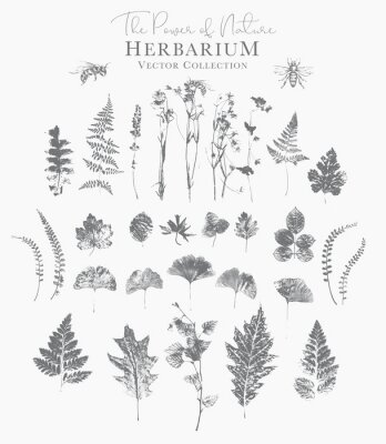 Affisch Set of dried herbs and natural plants and bees - herbarium logo collection on white background