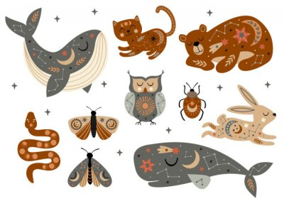 Affisch set of isolated celestial animals