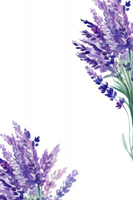 Affisch set of lavender flowers elements on an isolated white background, watercolor illustration, hand drawing, greeting card with a place for text