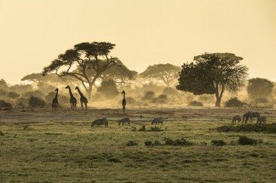 Affisch Silhouette di giraff