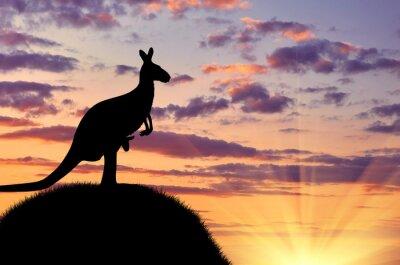 Affisch Silhuetten av en känguru med en baby