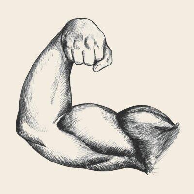 Affisch Skiss illustration av muskulös manlig höger arm