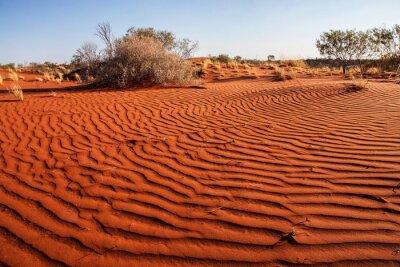 Affisch Små växter i öknen i västra Australien