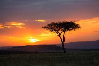 Affisch Solnedgång i Serengeti National Park, Tanzania, Afrika