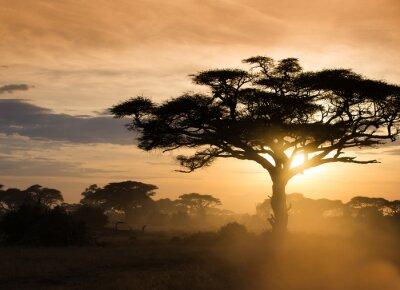 Affisch Solnedgång på den afrikanska savannen