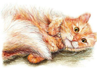 Affisch Söt trevlig ingefära fluffig katt handritad konst