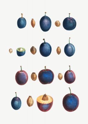 Affisch Stages of a plum