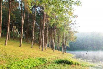 Affisch Sunbeams i Natural Spruce Woodland