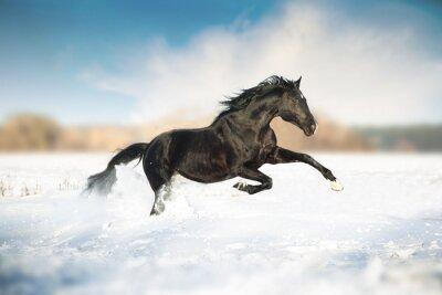 Affisch Svart häst springa i snön