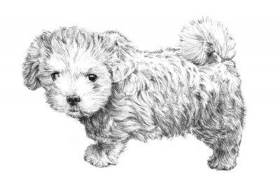 Affisch svart och vitt handritad hundvalp bild, förtjusande hundvalp skiss isolerad på vit bakgrund för veterinär, husdjursvård salong, veterinär Pet Care eller djuraffär visitkort clip art, broschyr annonser