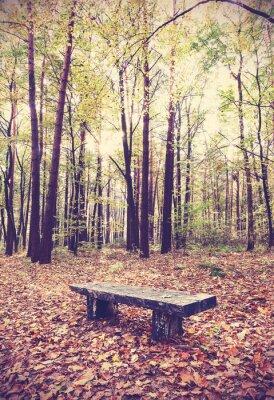 Affisch Tappning filtrerad bild av bänk i en skog.