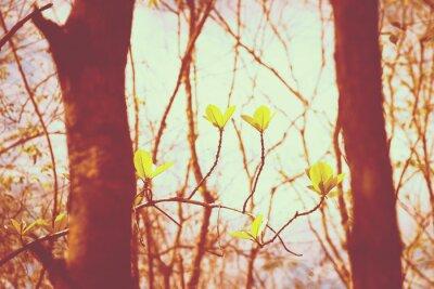 Affisch tappning skog