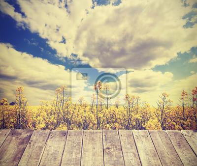 Affisch Tappning tonad sommar bakgrund med rapsfältet.