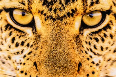 Affisch textur närbild print tyg ränder leopard