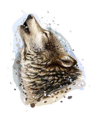 Affisch The wolf howls. Sketchy, graphical, color portrait of a wolf head on a white background with splashes of watercolor.