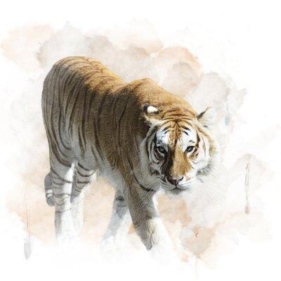 Affisch Tiger Walking