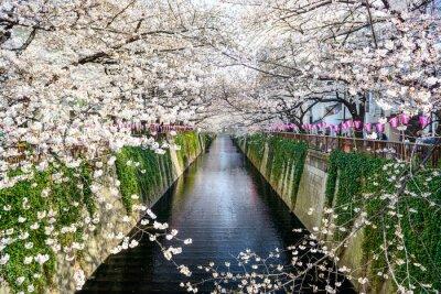Affisch Tokyo, Japan på Meguro kanalen under våren.