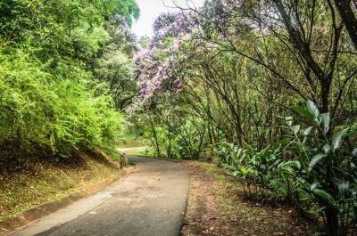 Affisch trilha entre árvores em um parque em São Paulo