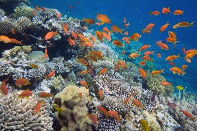 Affisch Tropisk fisk på korallrev