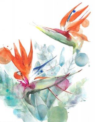 Affisch Tropiska blommor paradisfågel strelitzia akvarellmålning illustration isolerad på vit bakgrund