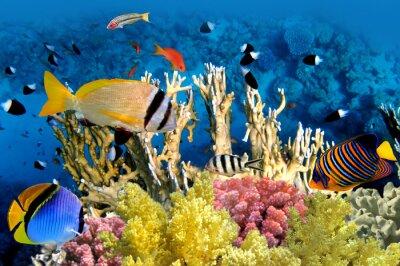 Affisch Tropiska fiskar och korallrev