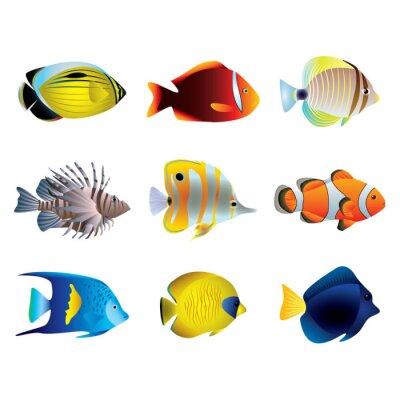 Affisch Tropiska fiskar vektor set
