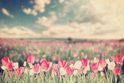 Affisch Tulpan blommor äng vintage