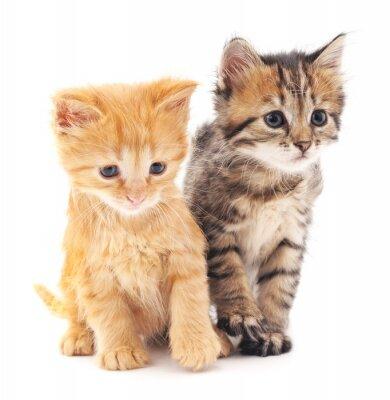 Affisch Två kattungar.