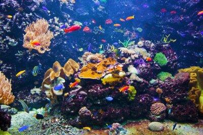 Affisch Undervattens- plats med fisk, korallrev