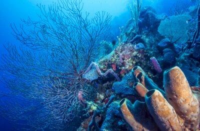 Affisch Underwater korallrev