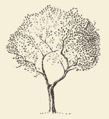 Affisch Unga olivträd illustration vektor handritad