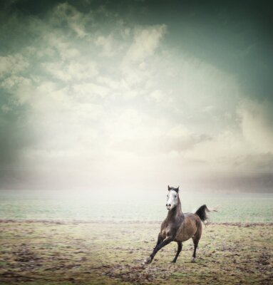 Affisch Unghäst som körs på bete och himmel bakgrund, tonade