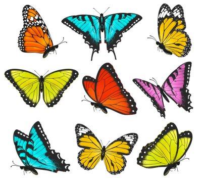 Affisch Uppsättning av färgglada fjärilar illustration